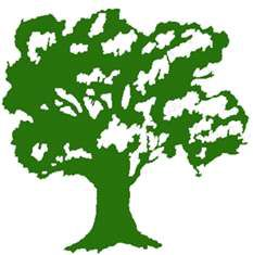 Drzewo roku 2015 - dąb Bolko